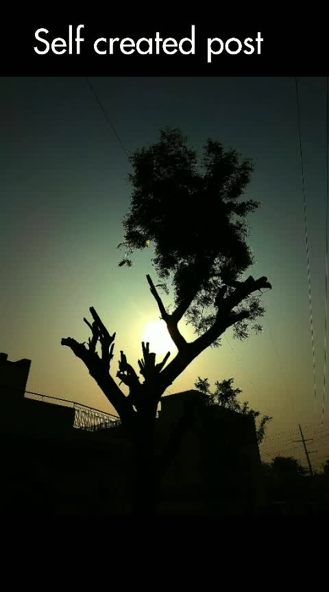 #onrequestpost #love-photography #pic-click #selfcreated #tree #sunkissed #song #alone #animation