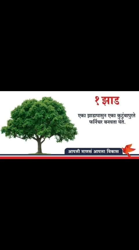 Save trees growing trees