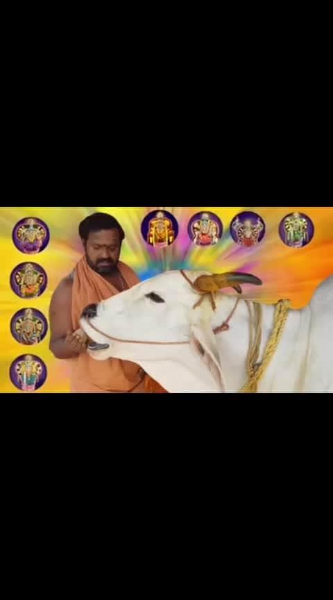 Amazing #cow #tirupati #souhindia #brahman #worship #stotra #bhakti #hindu #temple #Lakshmi #12crores #keemat #daily #gives #100 #liters #milk #divine #pooja #colourful #chandan #haldi #kumkum #gangajal #shringar #talent #Unique #imlovingit #classical #art #marvelous #god #blessings #indian #culture #unmatched #sansaar #world #oldest #religion