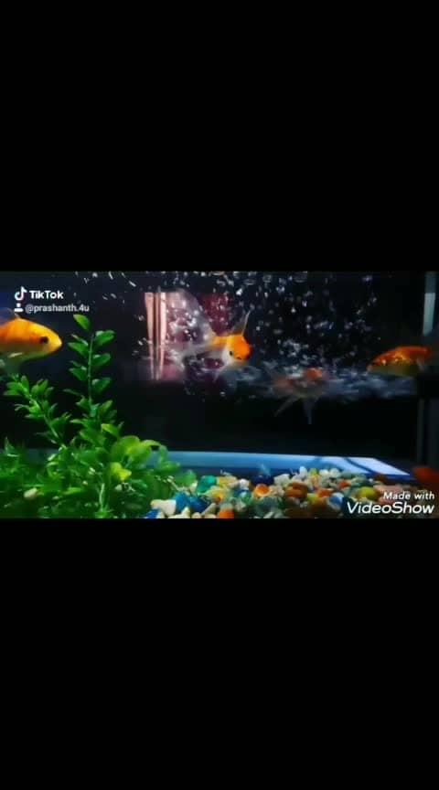 #fishes #nice #awesome #aquarium #maatevinaduga