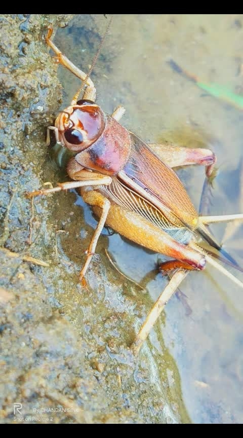 #foring,#grass insect