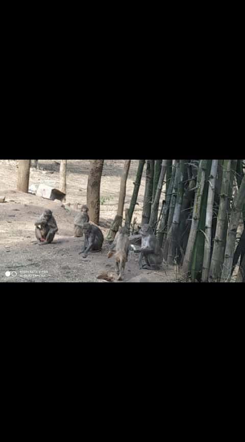 srisailam forest monkeys
