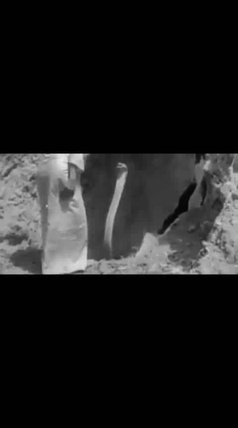 This video is so rare! The historical footage of the witch dancing with the king cobra in Burma in the 18th and 19th centuries was recorded by the British field exploration photography group. 😱 😱 😱 thrilling