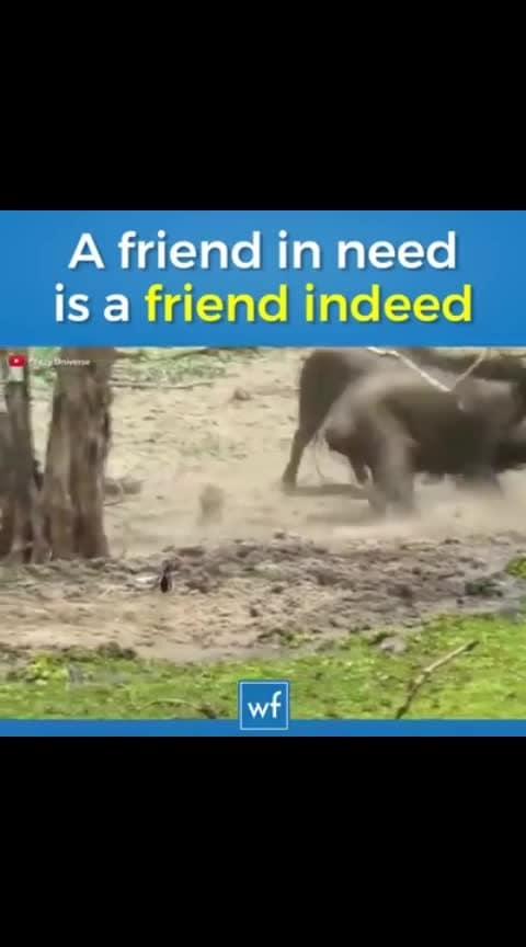A Friend In Need Is A Friend In Deed...