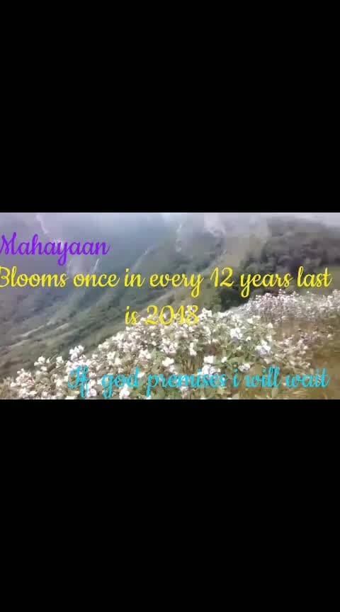 Neelakurinji flowers from Munnar Kerala  it blooms once in every 12 years last is 2018 near is 2030