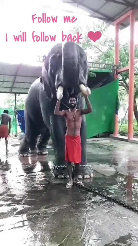 #elephant #kerala #fest
