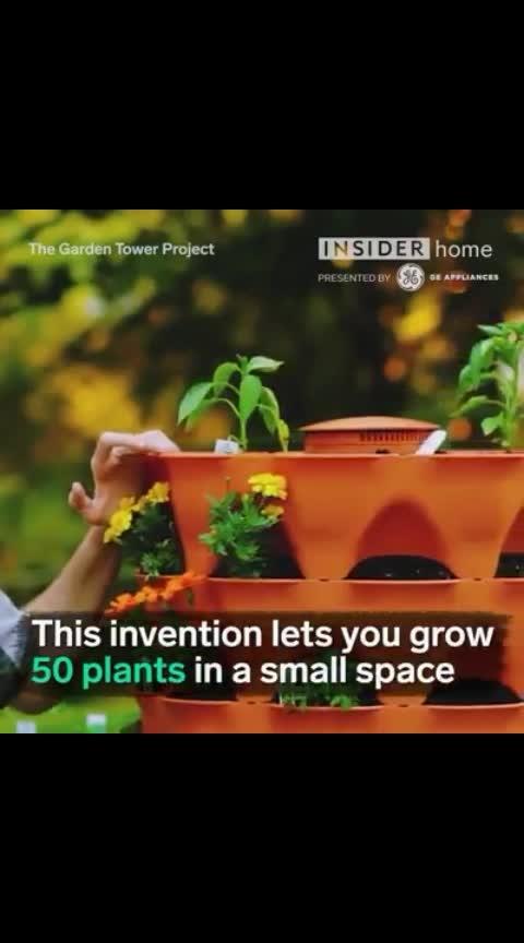 small place         #tree_perfection #gardening #vegitables