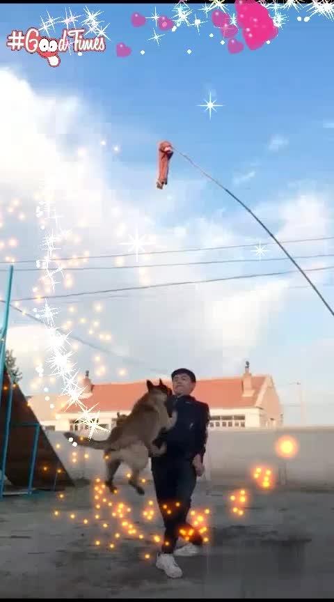 ###doggystyle ###amazing-video