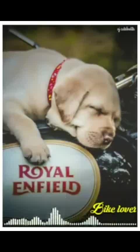 #royalenfield #royalenfieldbullet #royal-enfield-lover