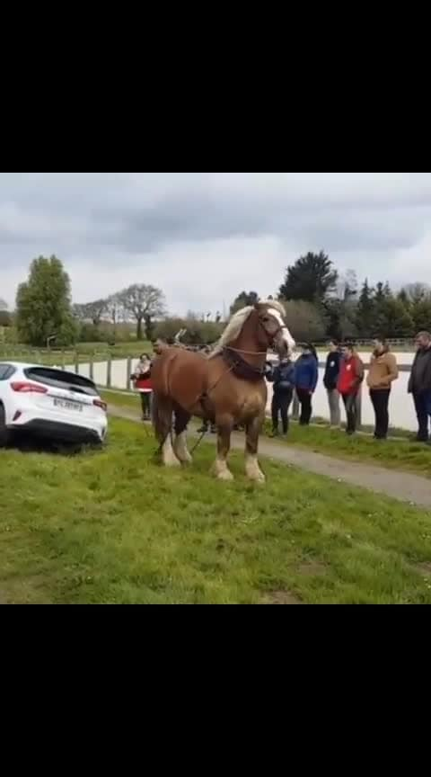 #HorsePower