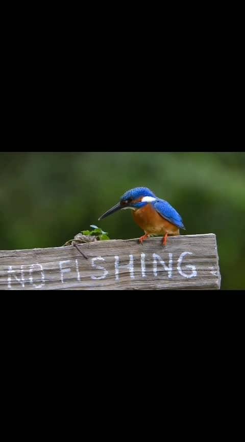 #birdsworld  #birdlovers