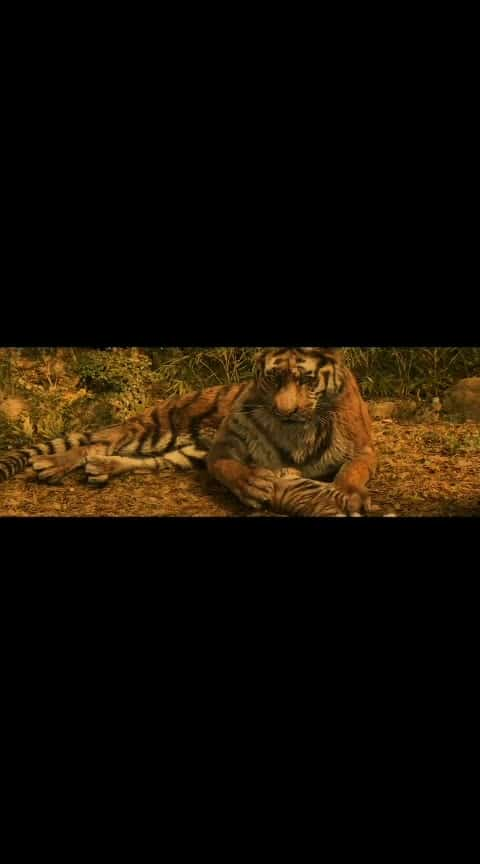 tigress baby
