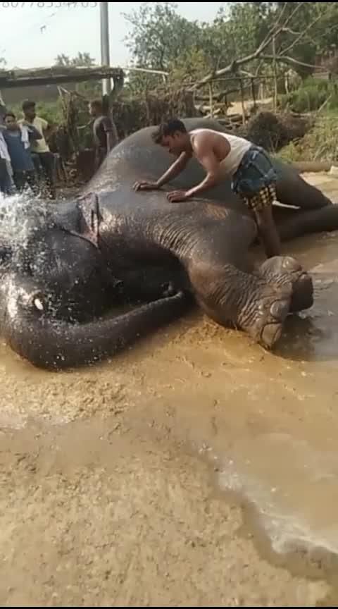 #elephant Mar gya