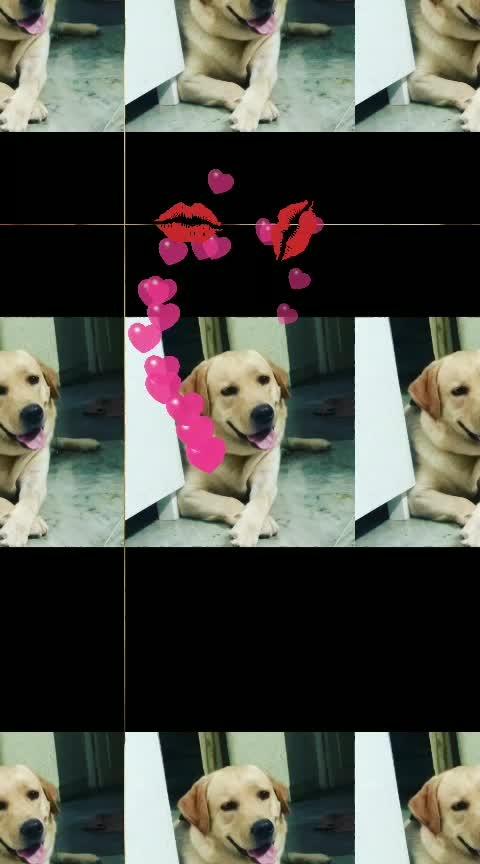 #dog #dogsofinstagram #puppy #dogs #dogstagram #love #cute #instadog #doglover #dogoftheday #pet #puppylove #puppiesofinstagram #puppies #pets #instagood #doggo #photooftheday #doggy #petstagram #ilovemydog #pup #adoptdontshop #cat #rescuedog #dogs_of_instagram #animals #doglovers #photography #dogsofinsta, I'm using @tagsfinder_com