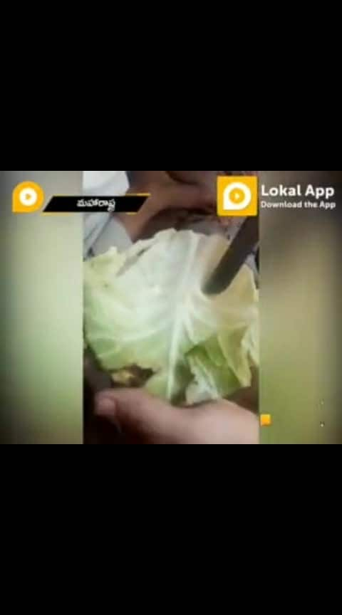 insect in cabbage