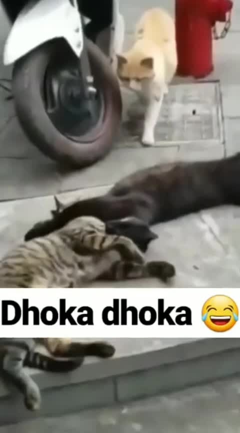 Dhoka...Dhoka 😂🤣