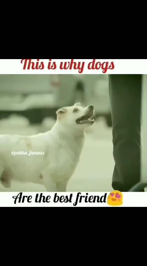 #dogs #lovedogs