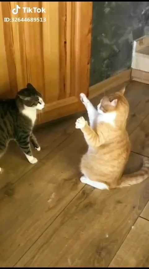 #funny #funnycat #funny video👌👍😊☺injoy
