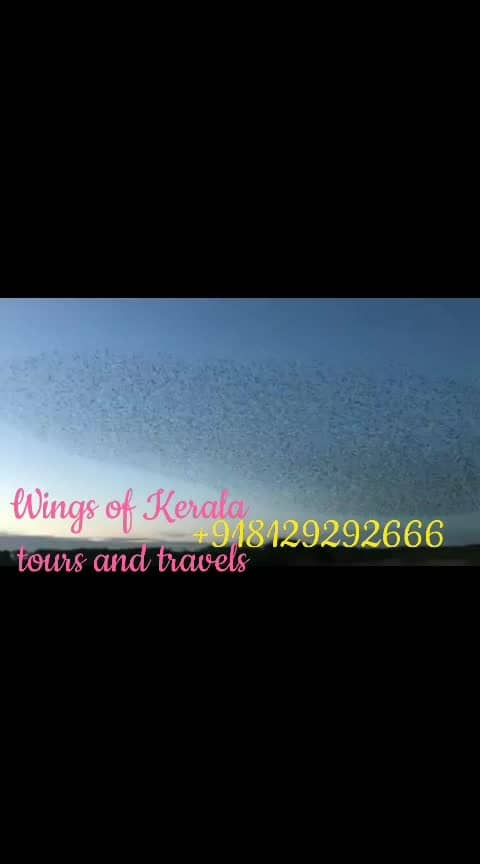 #wings#of#kerala#tours#and#travels# +918129292666 wingaofkeralatoursandtravels@gmail.com
