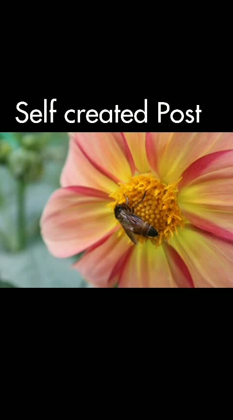 #selfcreation #captured #photographyoftheday #song #alone #animation #creative #honeybee #flowers #pose