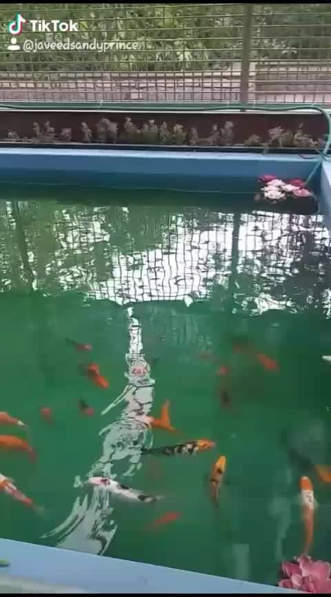 colorful fish's