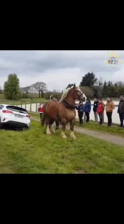 #real horsepower