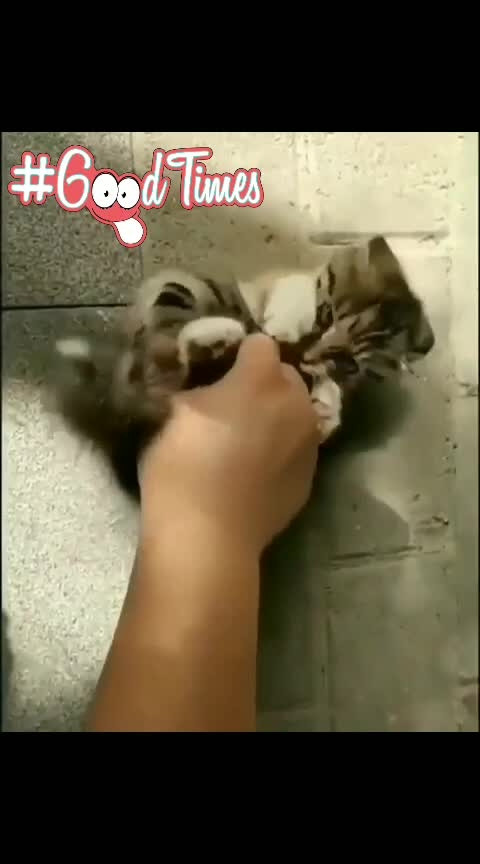 fun time with my baby cat #cats #roposo-fun #roposo-cute #cuteness-overloaded #animallover #roposo-music #myfirstpostonroposo #in-love- #ropso-touch-magic