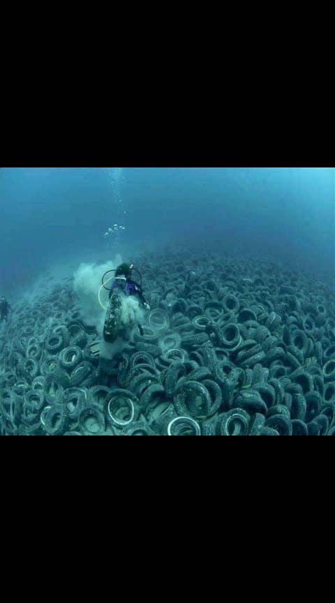 #World Oceans Day #Save Ocean #save animals
