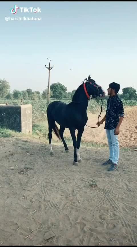 #horse  #horsepower #horses #horseriding #horseshoe