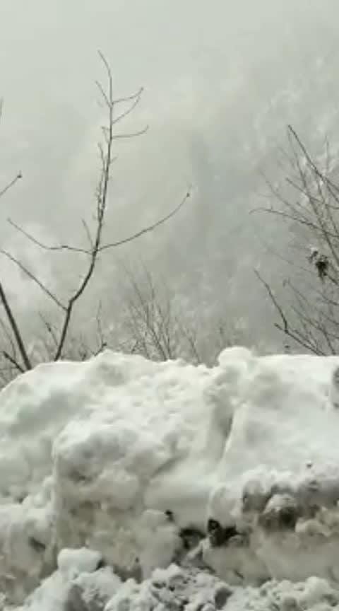 #snowfall #qaafirana #shimla #manali #himachal #snowflakes #nature #beauty