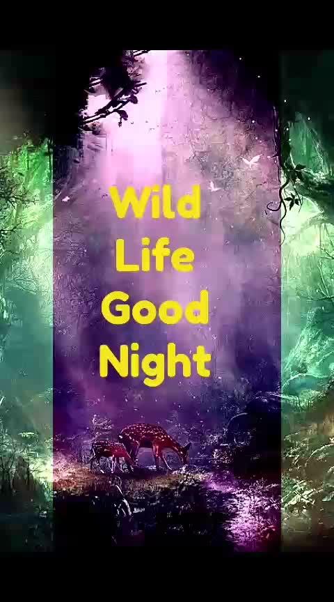 #wildlife