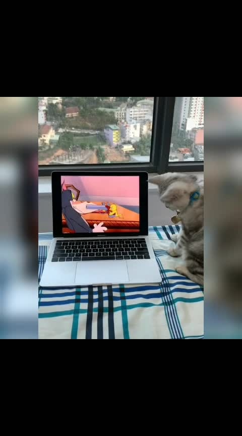 #funnycat  #funnyvideo