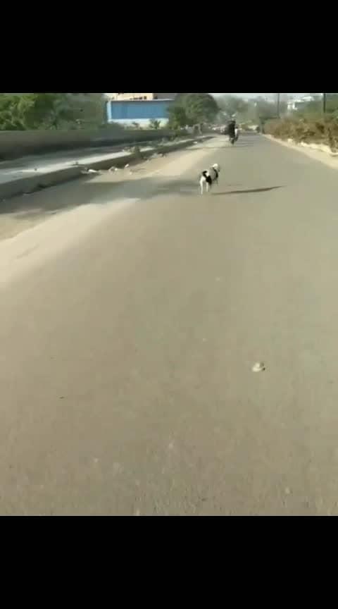 #doglovers #pitbulls 💕💕💕