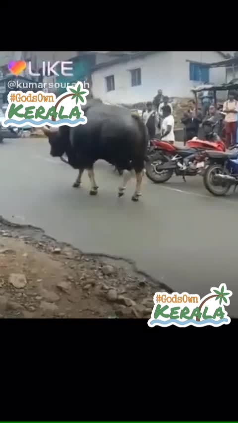 🐂🐂🐂 #godsownkerala #godsownkerala