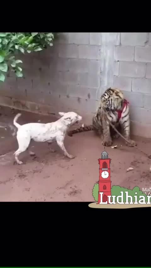 #ludhiana