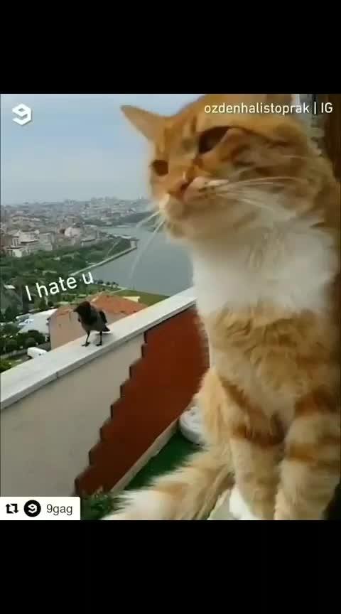 #very-funny #roposo-funn #funnycat #haha-tv