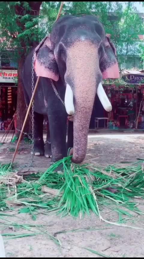 ആനചന്ദം തെളിയവേ...😍 #roposo-malayalam #anachandam