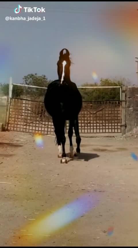 #horsepower  #horse