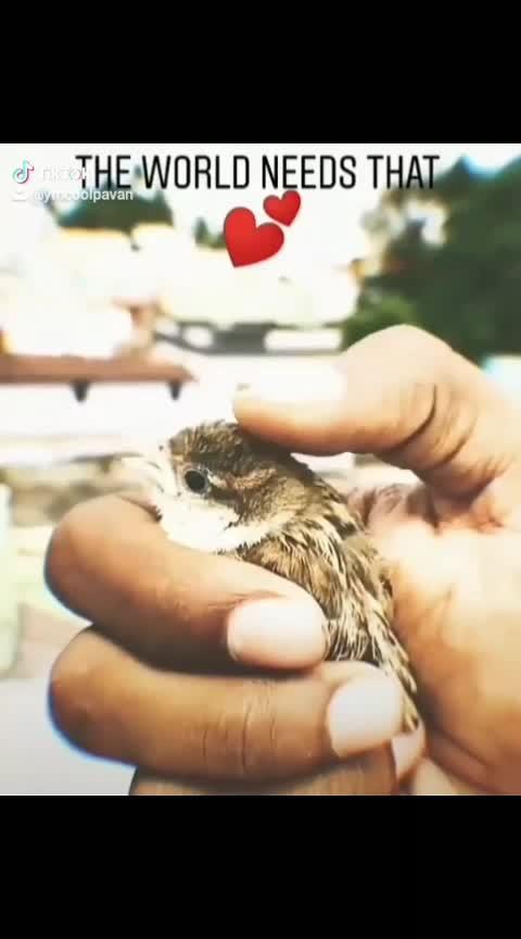#bulliguvva #birdsworld #savelife #out-of-theworld #much-needed #savetrees #savenature #pakshio
