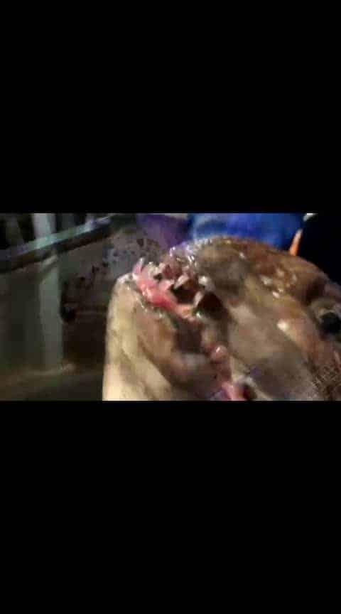 original pirana.world most killer fish  chathalum podi vidoola  . .@prilaga  #follow #instagood #so #prilaga #me #photooftheday #f4f #nice #s4s #followall #ilovemyfollowers #out #TFLers #shoutouter #so4so #followback #followme #shout #followforfollow #sobackteam #shoutoutforshoutout #shoutouts #soback #shout_out #followhim #shoutout #followher #love #shoutout4shoutout @prilaga  #TFLers #followme #followhim #sobackteam #photooftheday #out #shoutout4shoutout #s4s #ilovemyfollowers #love #follow #shout_out #f4f #me #followall #shout #followback #soback #shoutoutforshoutout #so #followher #shoutouts #prilaga #followforfollow #instagood #shoutout #nice #shoutouter #so4so