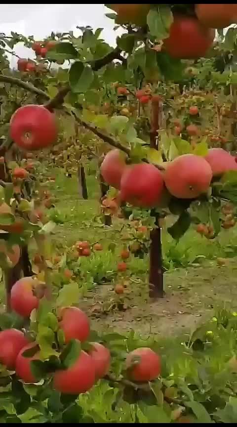 Apple ಬೇಕಾ Apple.