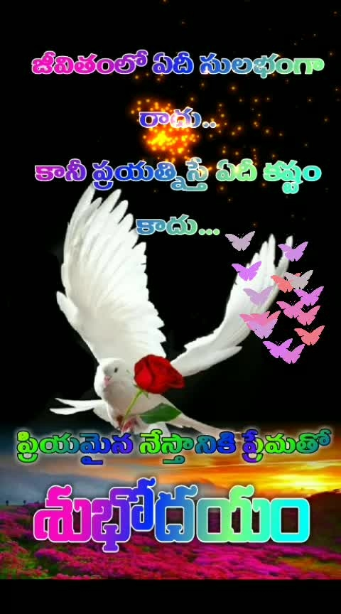 #goodmorning-roposo #thanks-roposo-for-such-a-colourful-video #subhodayam #happywednesday