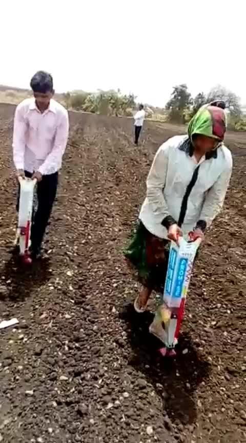 cotton seeds putting