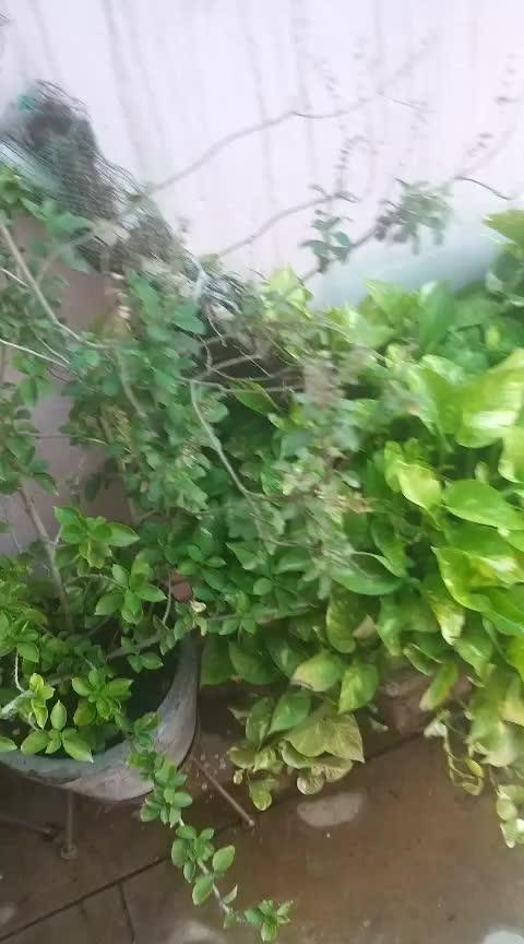 #roposoness #greenary #planting