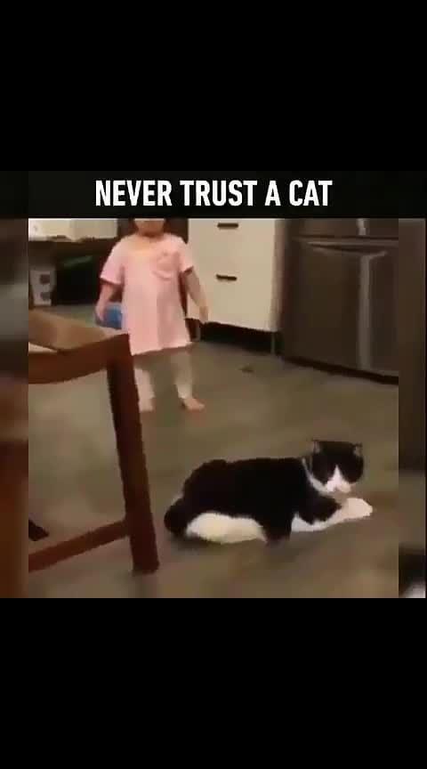 #funnycat #hahaha #donttrust 😂😂😂#cat