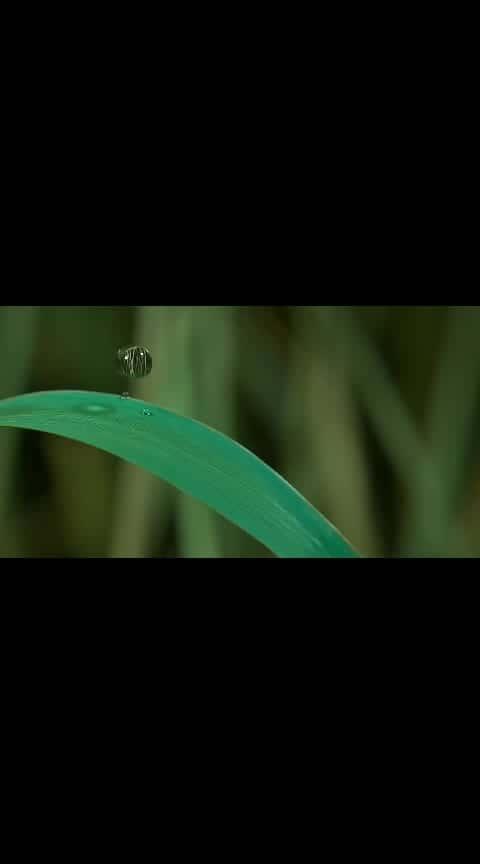 #roposo-bhakti #status_video #status #fullscreenstatusvideowhatsapp #featurethis