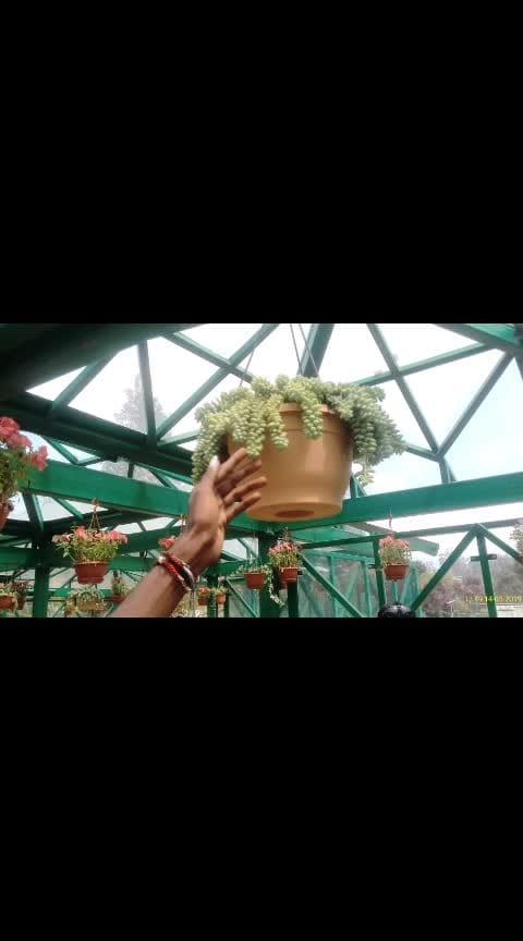 ooty botanical garden memories...