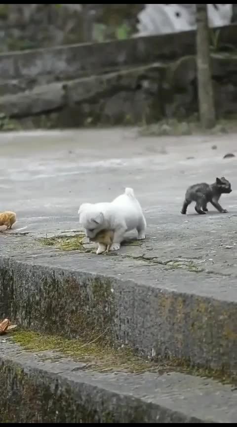 #love#pyar#nature#dog#cat#animal #caringlove #caring #care #doogy #fun #masti#side #love #animallover #animallovers #animallove #animallife