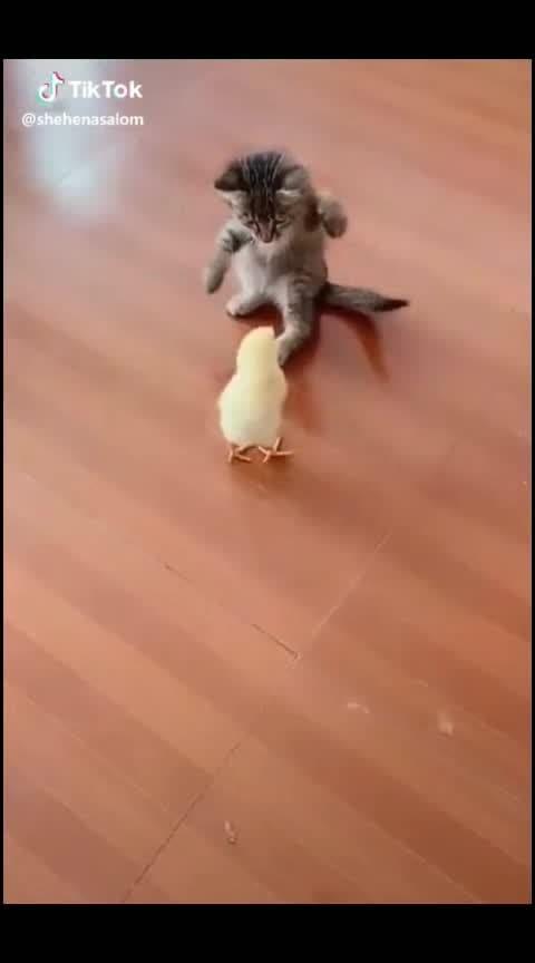 kitty cheeks