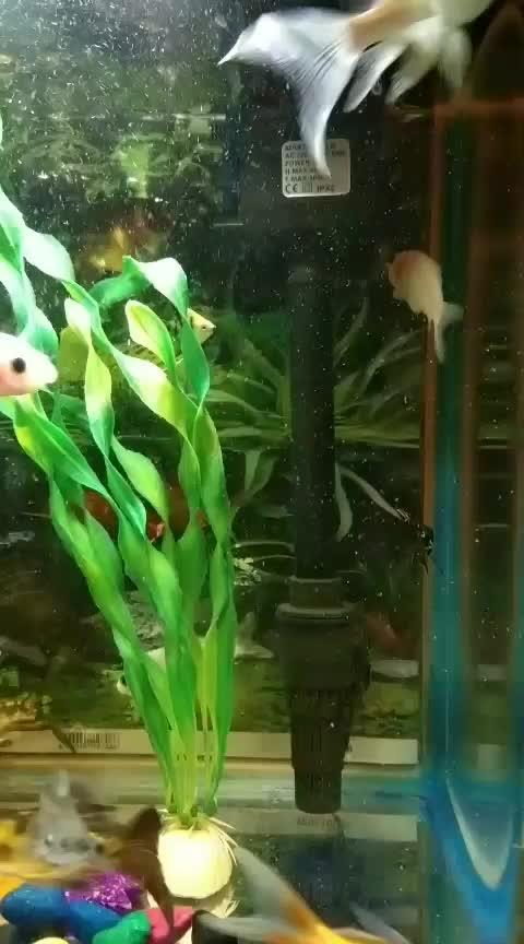sweet & colorfull fish